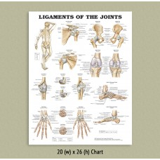 Anatomical Chart - Ligaments of the Joints
