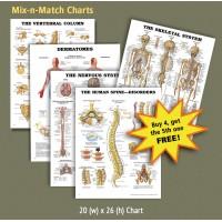 Anatomical Charts - Mix-n-Match Bundle Deal