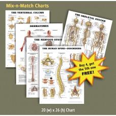 Anatomical Charts - Mix-n-Match (Get 1 FREE!)