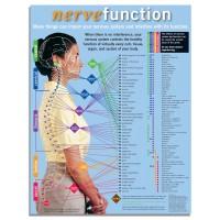 Handouts - Nerve Function