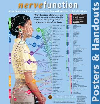 Nerve Functions